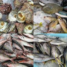 fish02_payao