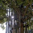 10_bamboo_cj
