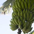 Banana_husa