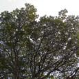 D_tree01_070126
