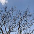D_tree_eda