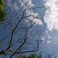 D_tree_eda2