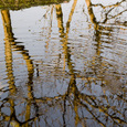 Tree_pond1
