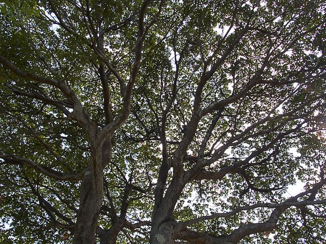 D_tree_eda_z