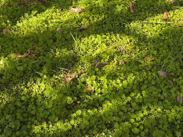 Grass_lands