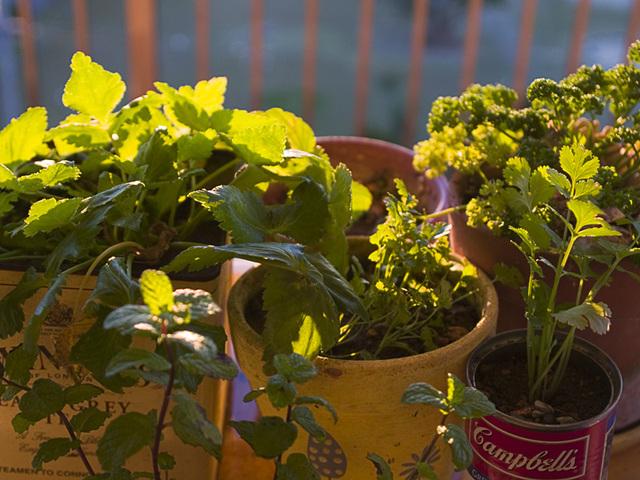 Herb_sunlight