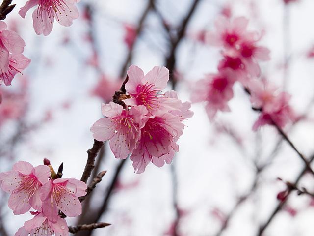 Sakura02z_070209