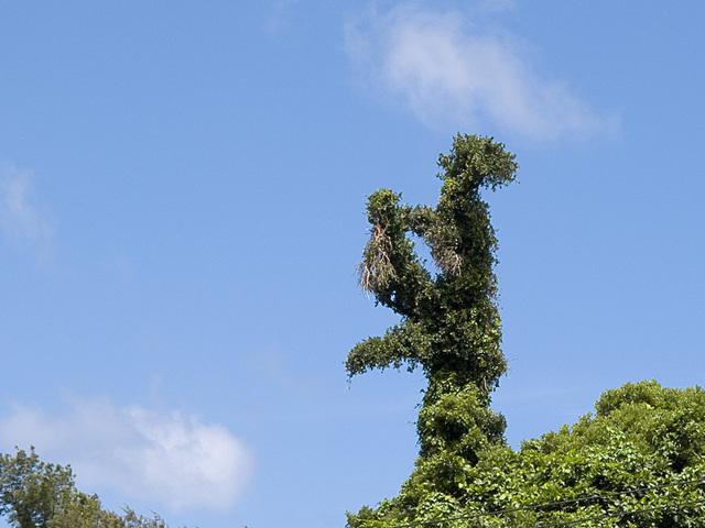 Tree_ahiru