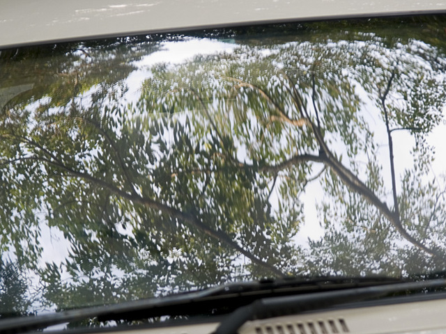 Trees_window_car