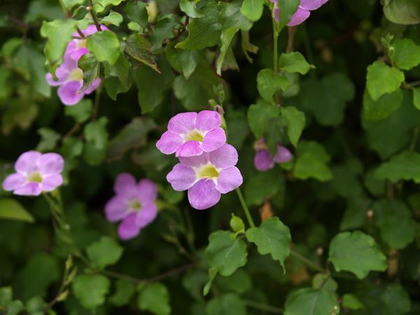 Violet03_050520