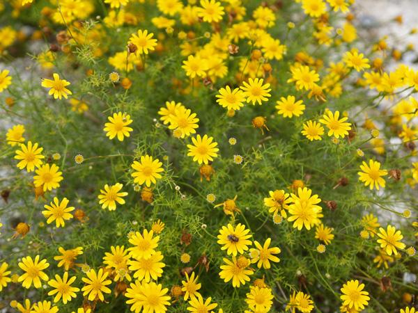 Yellow01_050520