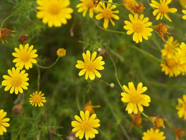 Yellow02_050520