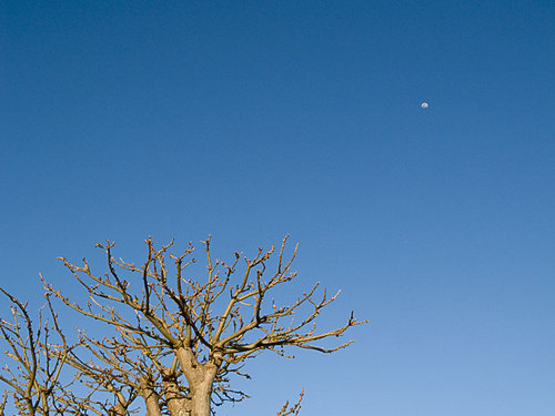 Baobabu_moon