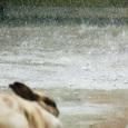 060610_12kun_rain