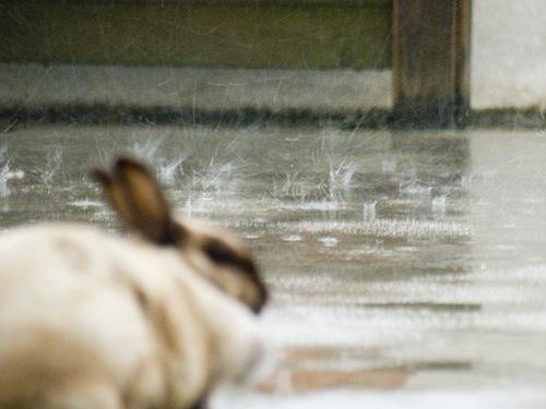 06061010kun_rain